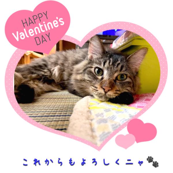 愛する猫ちゃんに、バレンタインのプレゼント!